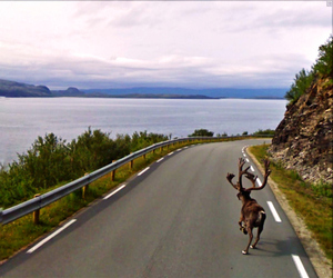 31 Unexpected Google Street View Sightings