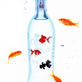 5 Coolest Sake (Japanese Rice Wine) Bottles