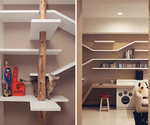 A Living Space Catered To Cats