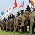 Anantara's Elephant Polo Package