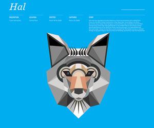 Animal Infographic