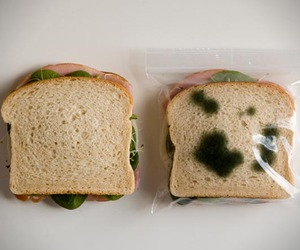 Anti-Theft Sandwich Bags