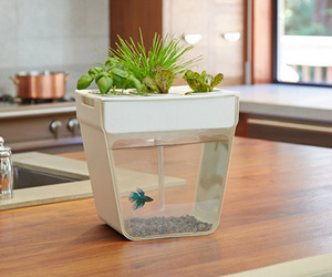 Aquarium with Mini Garden