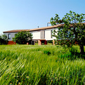Award Winning House in a Mallorcan Fig Orchard