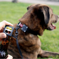 Bark Beer | Dog Collar Bottle Opener