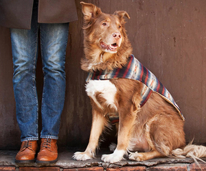 Billy Wolf | Handcrafted Dog Jackets