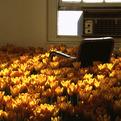 Bloom – Flower Installation by Anna Schuleit