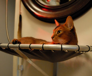 Brat Cat Designs Hammock Cat Bed
