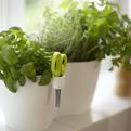 Brussels Herbs Pots