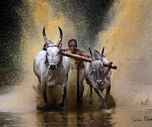 Bull Surfing, Kerala Southern India