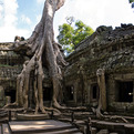 Cambodian Temple of Ta Prohm