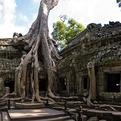 Cambodian Temple of Ta Prohm
