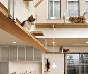 Cat House by Asahi Kasei