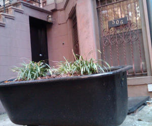Claw Foot Tub Garden in Brooklyn