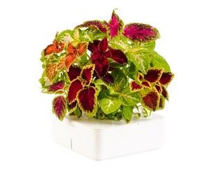 Click and Grow Electronic Flowerpots