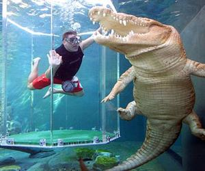 Crocosaurs Cove - Cage Of Death