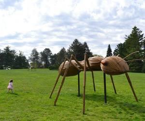 David Rogers' Big Bugs