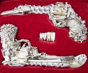 Dead cats' bone pistols