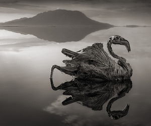 Deadly Lake Turns Animals into Stone Sculptures