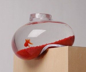 Distorted Aquarium by Psalt Design