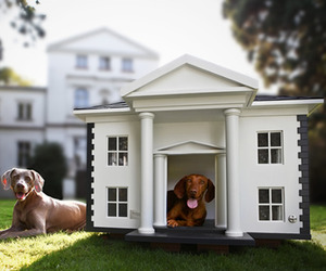 Dog Homes | by Best Friends Homes