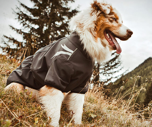 Dog Outdoor Overalls by Hurtta