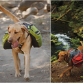 Dog Packs | by Ruffwear