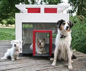 Doggy Architecture