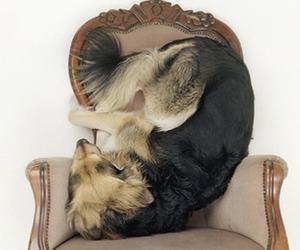 Dogs as Seen by Dutchman Maarten Wetsema