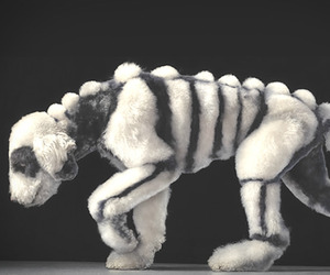 Dogs Gods, by Tim Flach