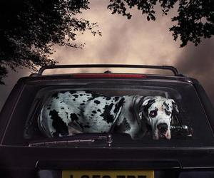 Dogs In Cars | Martin Usborne