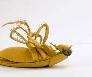 Eva Avidar | Still Cockroach