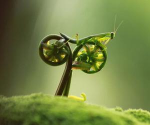 Fantastic Macro Insect Shots | Tustel Ico