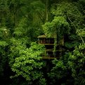 Finca Bellavista: Sustainable Forest Treehouse Community