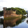 'Floating Forest' Grows on a 102 Year Old Abandoned Ship