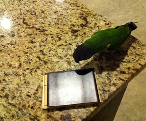 Flooring  Selections Shouldn't be Left to the Birds