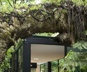 Forest Home in New Zealand by Chris Tate