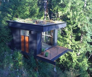 Forest Office Space in Washington by Peter Daniel Frazier
