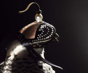 Formal Falconry. Diamond Studded Hawk's Hoods.