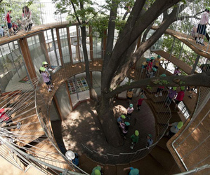 Fun Playground Around a Tree | Tezuka Architects