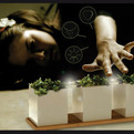 Gaia Bio Lamp