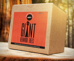 Giant Redwood Tree Self Starter Kit