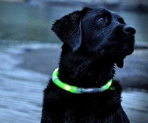 Glowdoggie