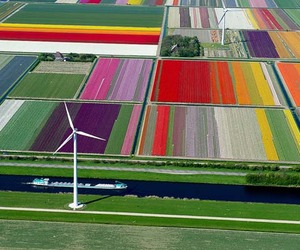 Gorgeous Aerial Photos Of Tulip Fields In The Netherlands