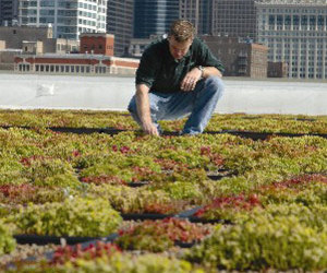 Green Grid Roof Garden from Carlisle