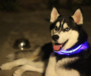 Halo Pet Collars