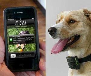 Heat Sensing Dog Caller