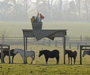 Horse Shelter in Germany
