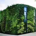 House Covered in a Lush Green vertical Garden