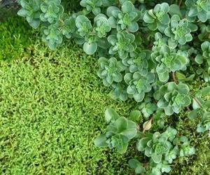Hypnum Moss Garden Installation